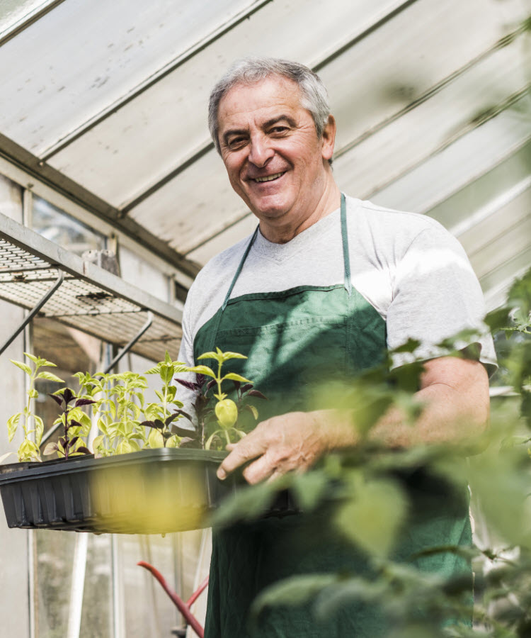 Man in greenhouse holding tray of seedlings