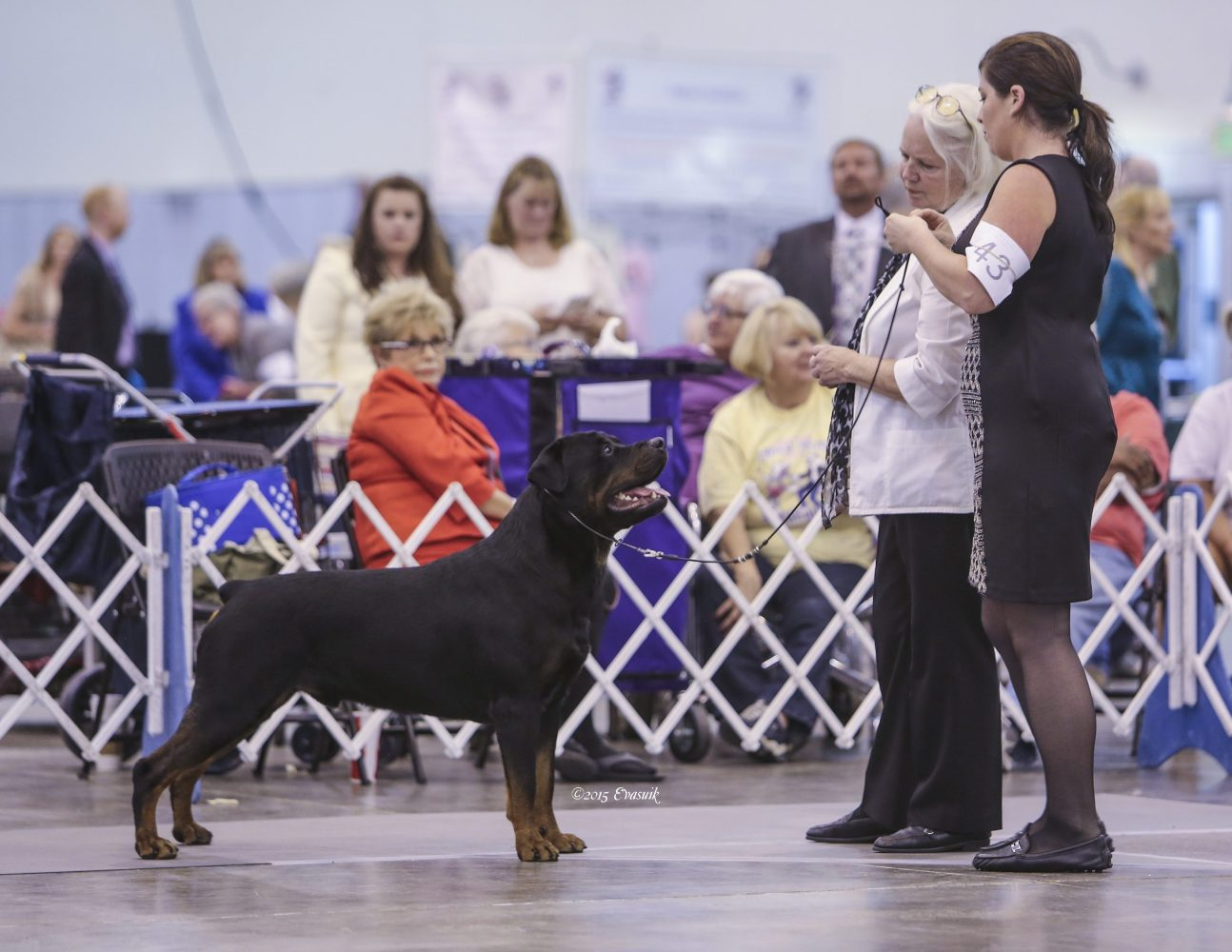 Wilson and handler at a dog show