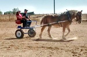 Two months after emergency open-heart surgery and C-section, Veronica Wilkins is back to doing things she loves, as well as new ventures. Here she drives a Belgian draft horse for the first time.