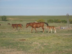 Kelley now lives a full and active life on a horse ranch near Byers, Colorado. Photos courtesy Shannon Kelley.