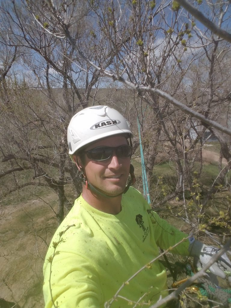 Daniel Bryce is shown high in a tree. Bryce works as an arborist.