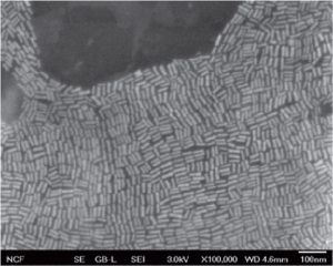 Gold nanorods, as seen through a scanning electron microscope (courtesy Won Park).