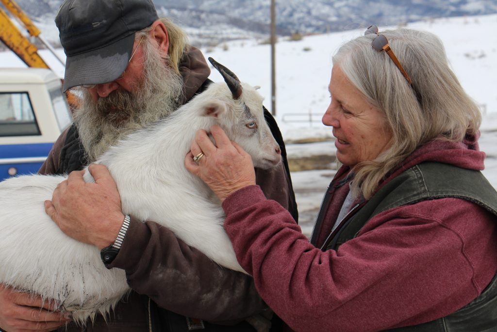 Carl Wheeler holds Patsy, Barb's miniature fainting goat and steadfast companion.
