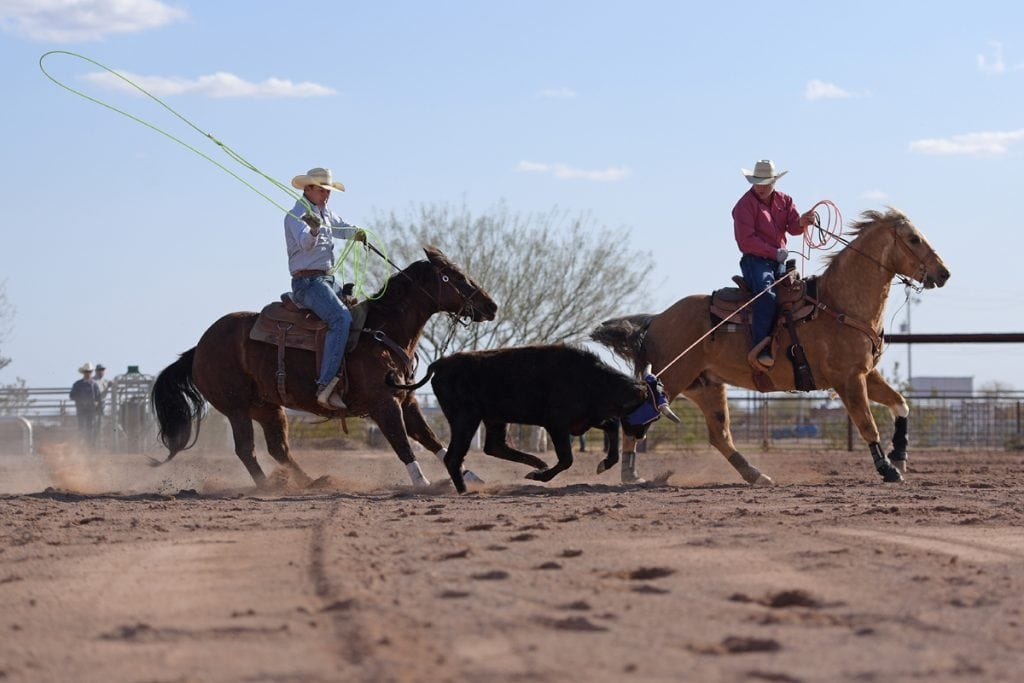 Archie Chant swings his rope to catch a steer's feet as his doctor, Jason Stoneback holds his rope on the steer's horns. Both men are on horseback. Thanks to Stoneback, Archie is riding, roping and ranching again.