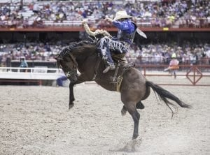 A cowboy manages to stay on a horse at it tries to buck him off at Cheyenne Frontier Days.