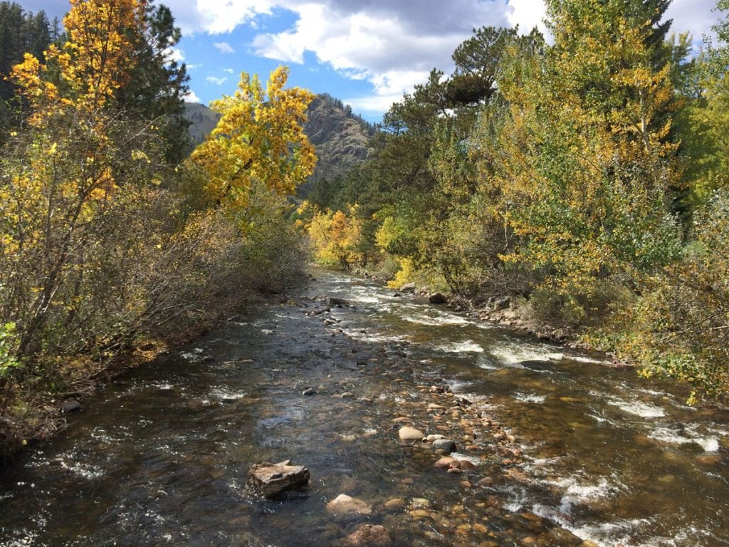 The Cache La Poudre River with yellow fall lives on trees and some mountains in the background | Best places to see fall colors in Colorado