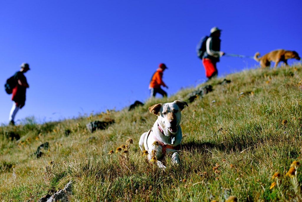 A small yellow lab sits in the foreground with hikers and a bright blue sky in the background.