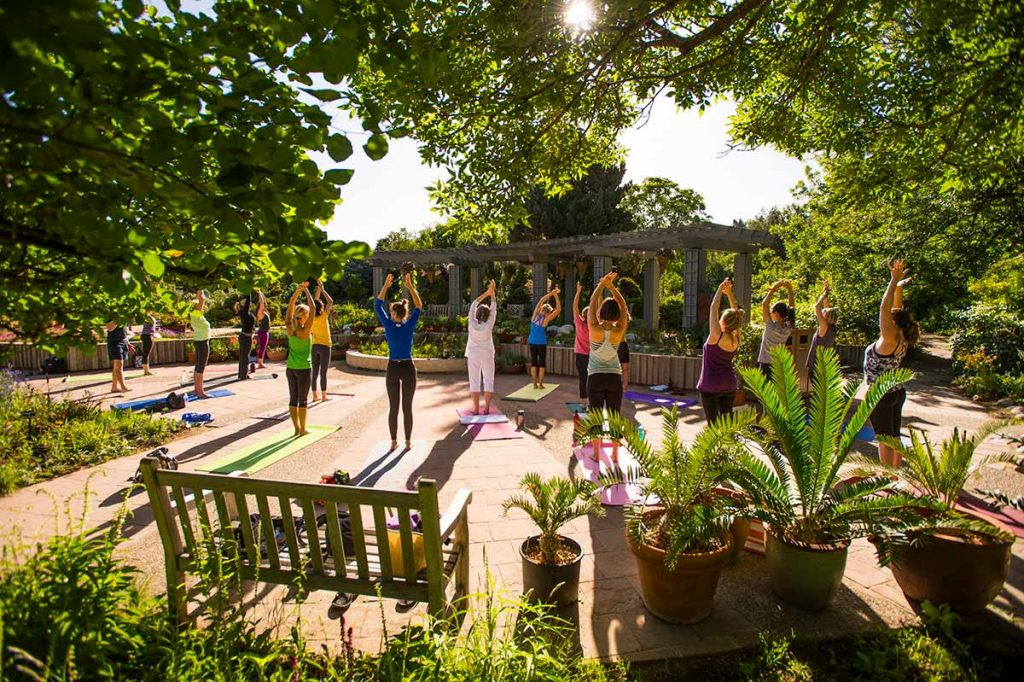 outdoor yoga class in a shady area with trees