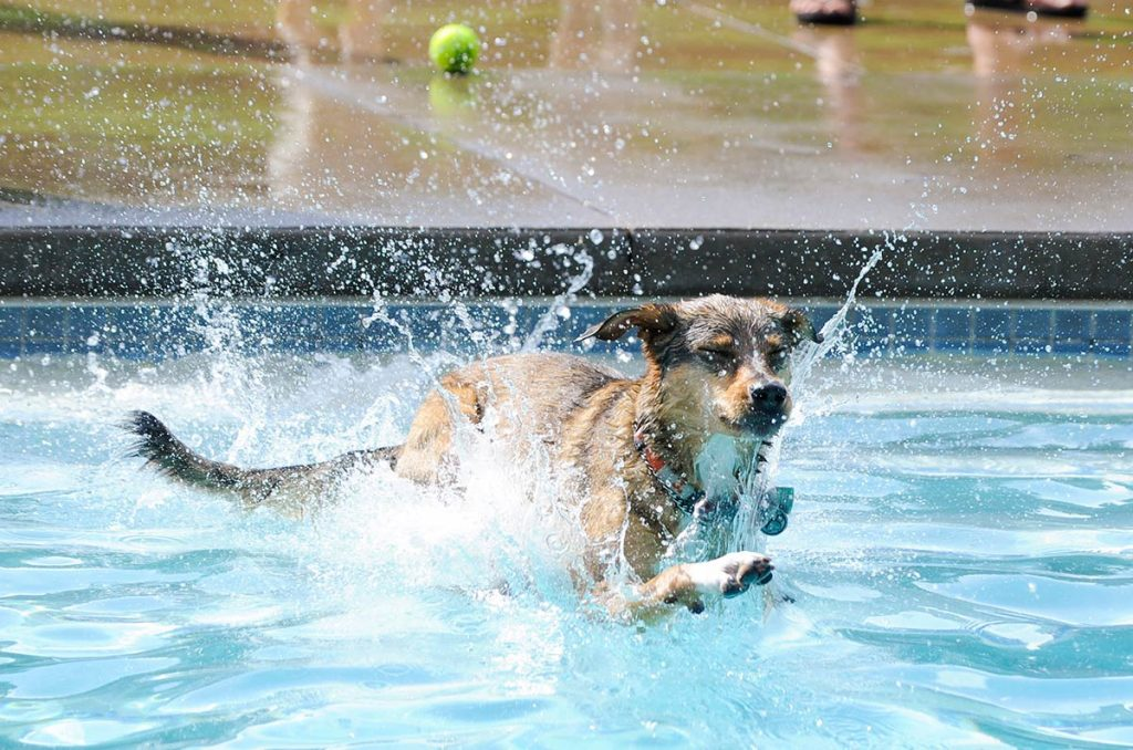 a dog splashes into a pool with a tennis ball in teh background