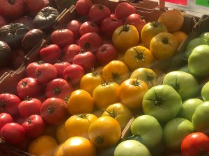 For Colorado harvest recipes you can use fresh tomatoes like this colorful array of purple, red, yellow and green tomatoes at a farmer's market.