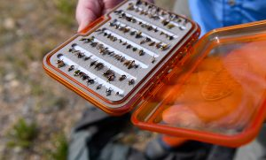 flies in a tackle box