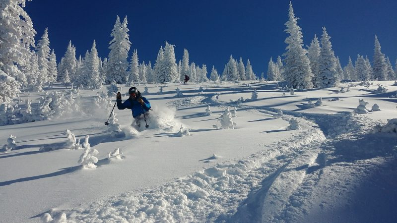 This photo shows two skiers skiing through deep powder with blue skies and snow-covered trees in the background.