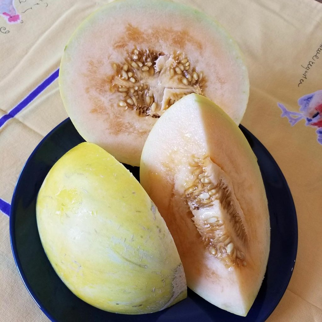 Crenshaw melon, a great cooking melon