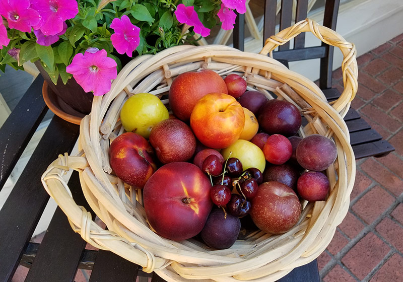 fruit basket of stone fruits