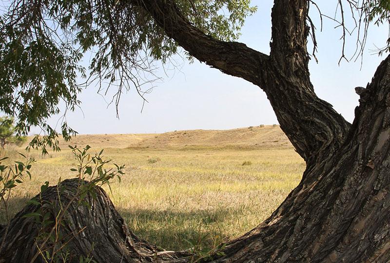 open prairie of the Pawnee National Grassland.