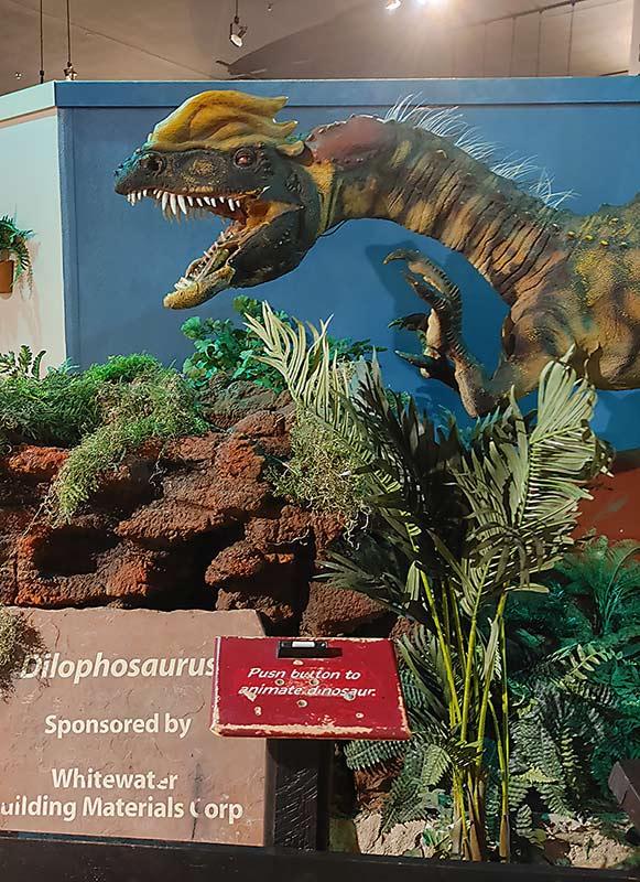 The dinosaur museum in Fruita, Colorado, includes a animatronic dinosaur.