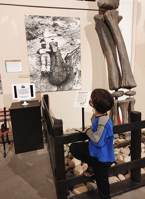 kid looks at a dinosaurs in Colorado exhibit.