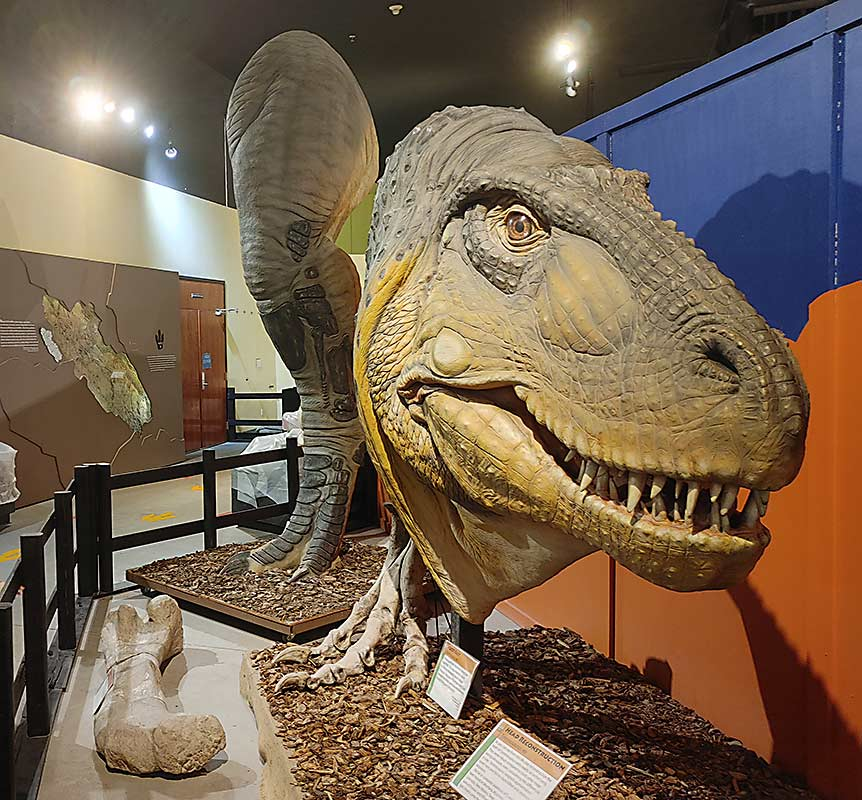 When searching for dinosaurs in Colorado, look that this T-Rex replica at the Dinosaur Journey Museum in Fruita, Colorado.