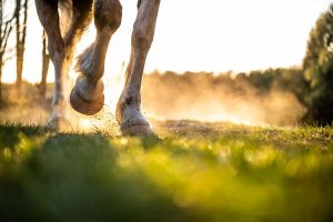 An image of a horse's legs. Photo: Getty Images.