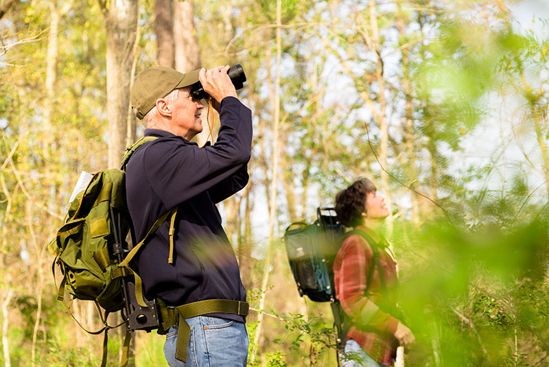 Add bird-watching to your list of mindfulness activities to try. Source: Getty Images.